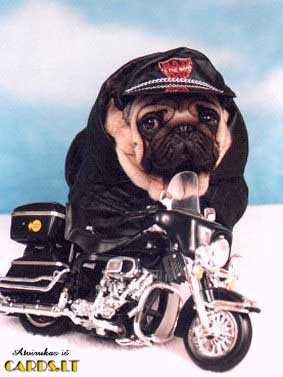 Toughest biker
