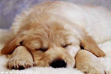 Sleepy...