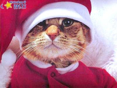 Kalėdinis kačiukas