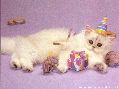 Kačiukas su dovanėle